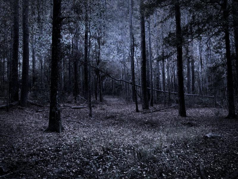 dark_woods_stock_1_by_venomxbaby-d3a05mc