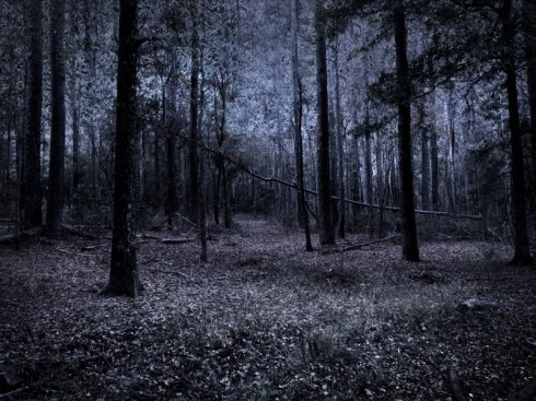 dark_woods_stock_1_by_venomxbaby-d3a05mc